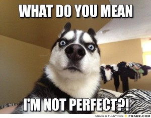 Meme: Condescending dog asks, What do you mean I'm not perfect?!