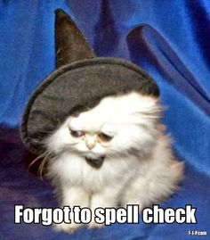 Sad cat wearing a witch's hat with the caption, Forgot to spell check