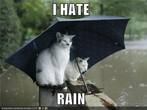 Two cats under an umbrella with the caption, I Hate Rain