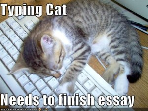 Typing cat (asleep on the keyboard) needs to finish essay
