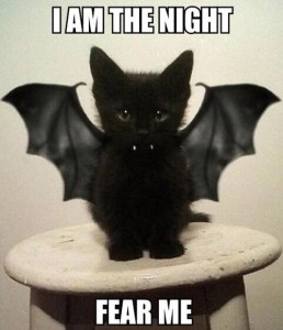 Black kitten with bat wings, captioned I am the night. Fear me.