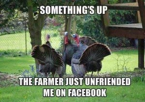 Group of turkeys, with the caption, Something's up. The farmer just unfriended me on Facebook